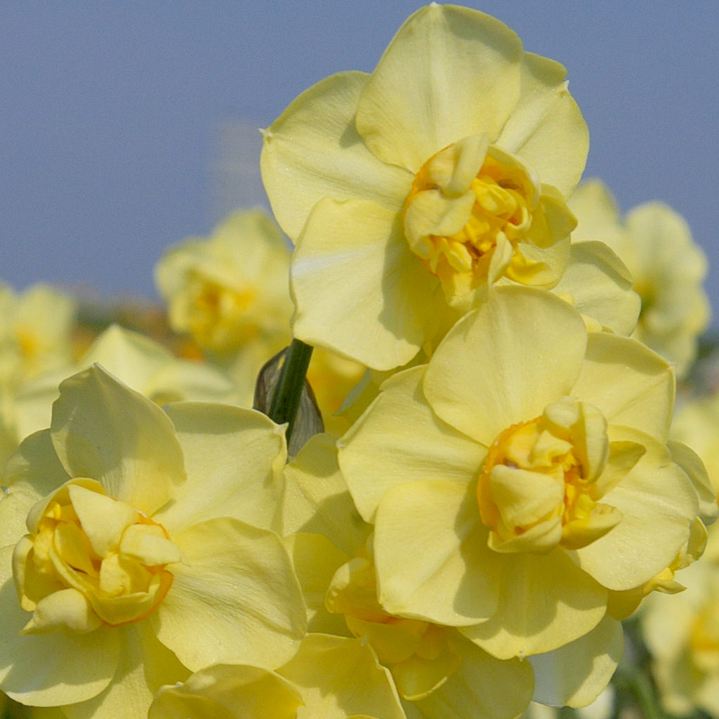 Photo of Yellow Cheerfulness