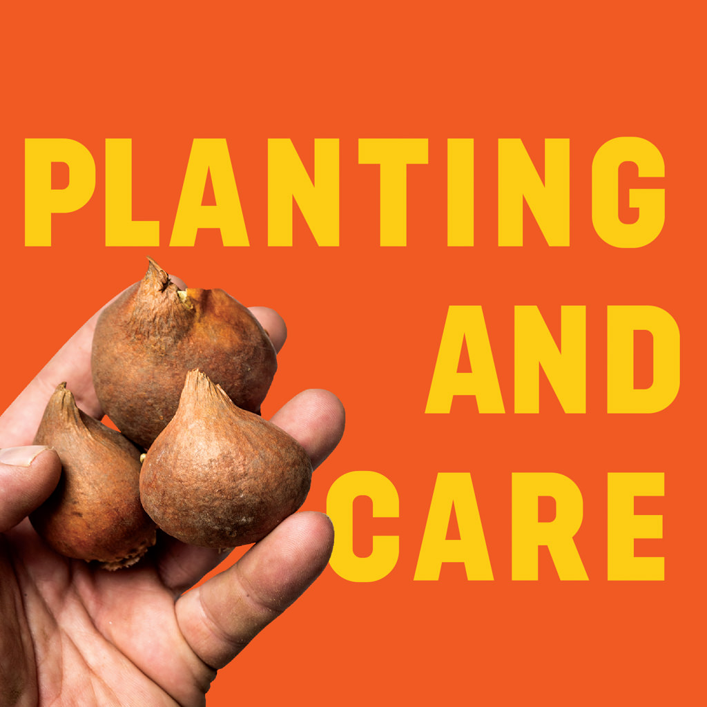 Planting and Care